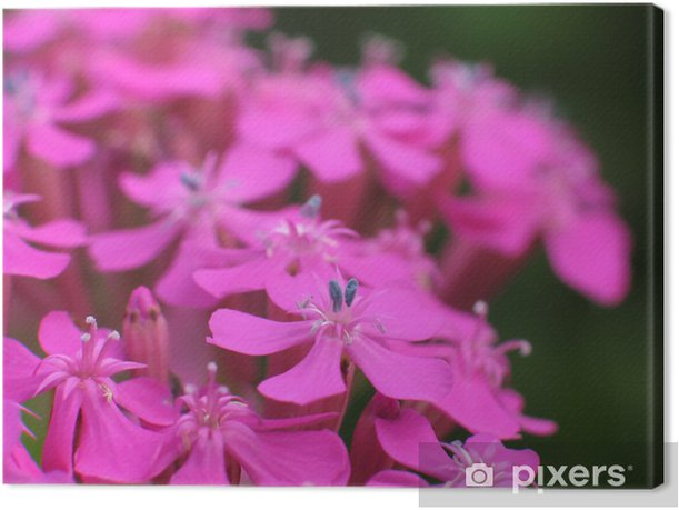 Obraz na płótnie Lepnica - Kwiaty