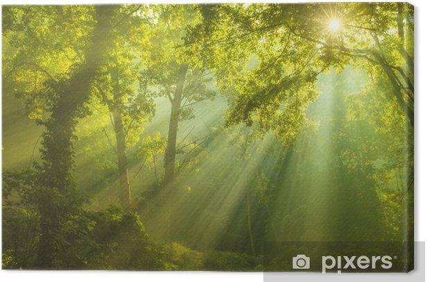 Obraz na płótnie Leśna ostoja - iStaging