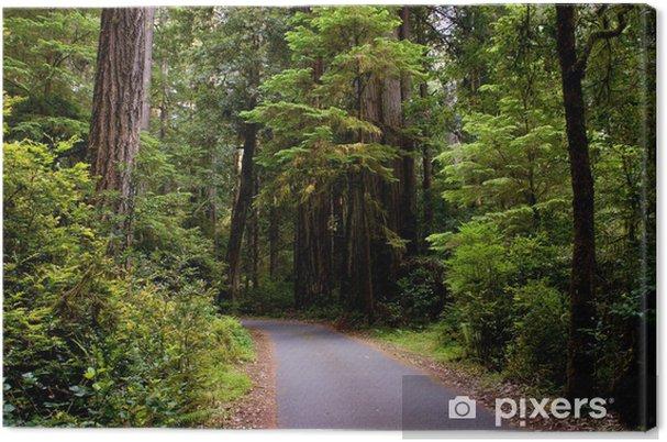 Obraz na płótnie Leśna ścieżka - Ameryka