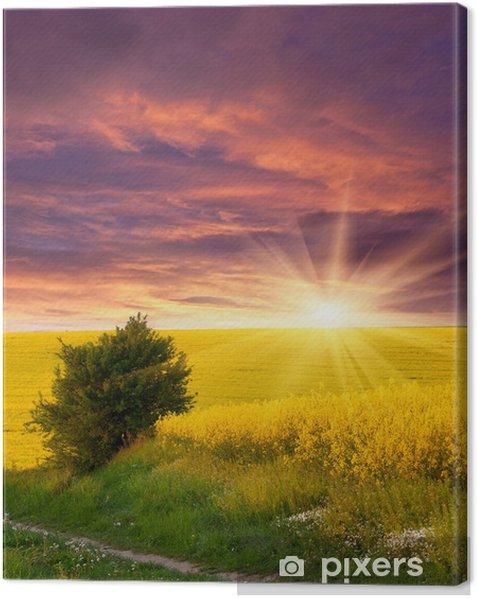 Obraz na płótnie Letni krajobraz z pola żółtych kwiatów. Zachód słońca - Krajobraz wiejski