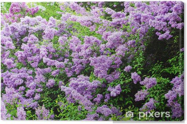 Obraz na płótnie Lilac kwiaty w tle - Szczęście