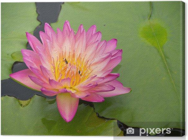 Obraz na płótnie Lilia wodna - Kwiaty