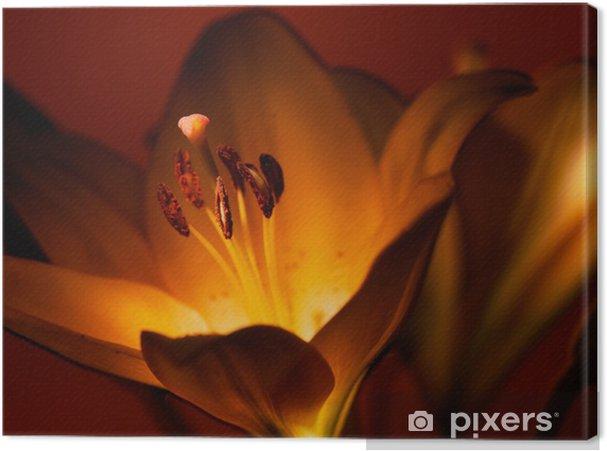 Obraz na płótnie Lilia - Kwiaty