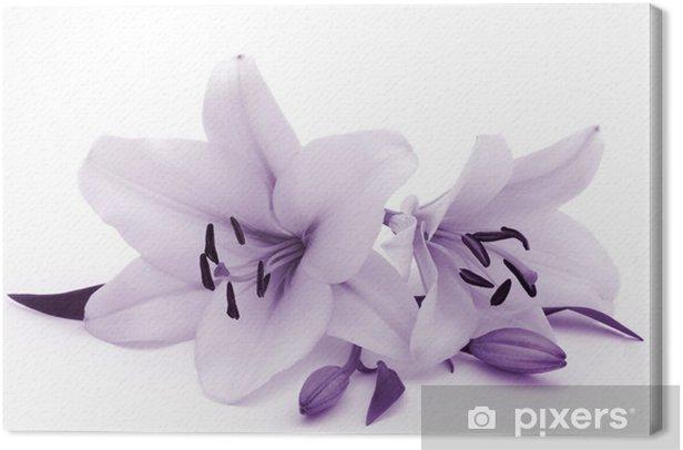 Obraz na płótnie Lilie w niebieski stonowanych - Kwiaty