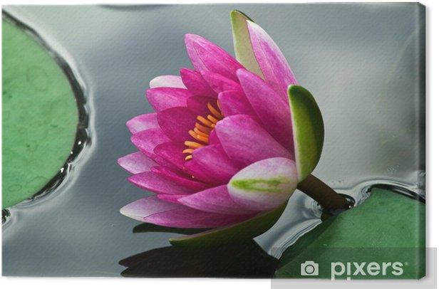 Obraz na płótnie Lily kwiaty 1343 - Kwiaty