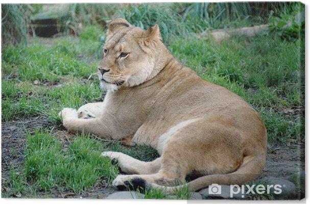 Obraz na płótnie Lion 3 - Tematy