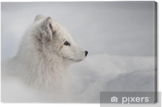Obraz na płótnie Lis polarny - Style