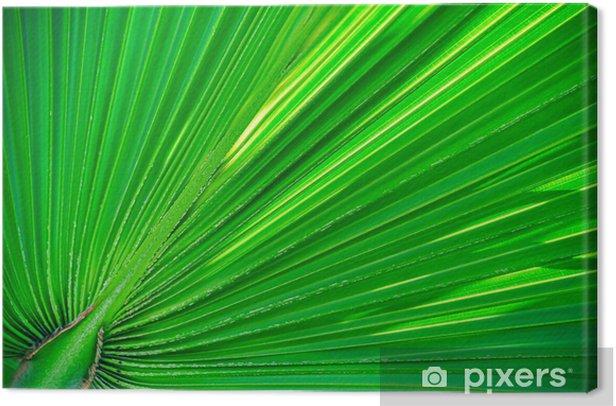 Obraz na płótnie Liść palmowy - Pory roku