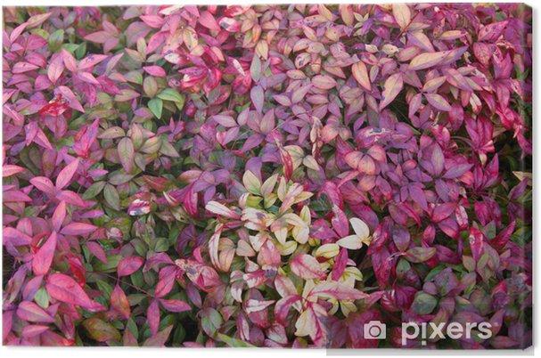 Obraz na płótnie Liści nandina - Rośliny