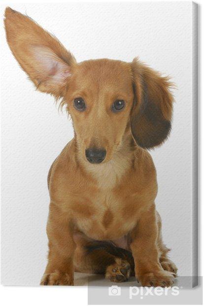 Obraz na płótnie Listening pies - Tematy