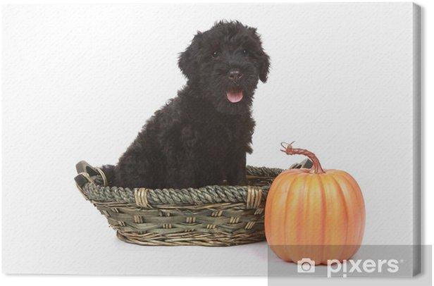 Obraz na płótnie Little Black Russian Puppy Terrier na białym tle - Ssaki