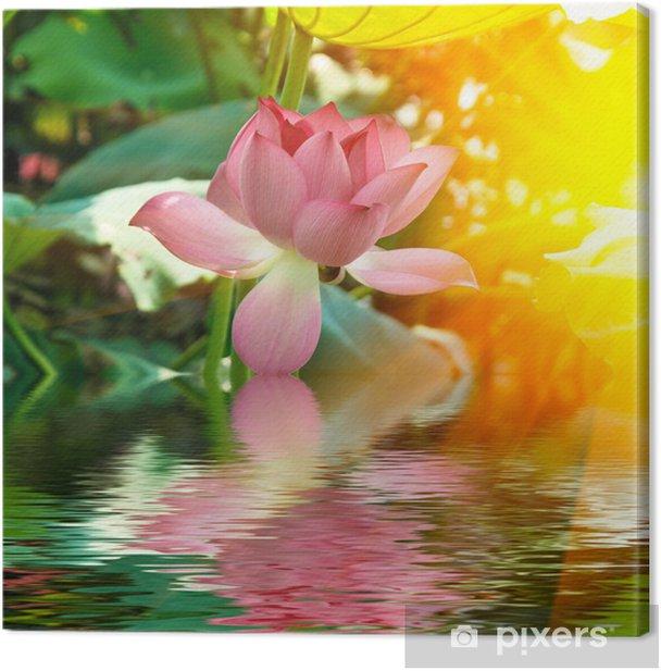 Obraz na płótnie Lotos - Kwiaty