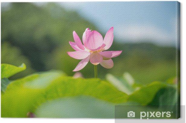 Obraz na płótnie Lotus w rozkwicie - Pory roku