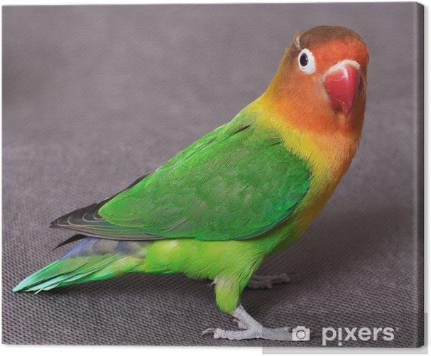 Obraz na płótnie Lovebird - Tematy