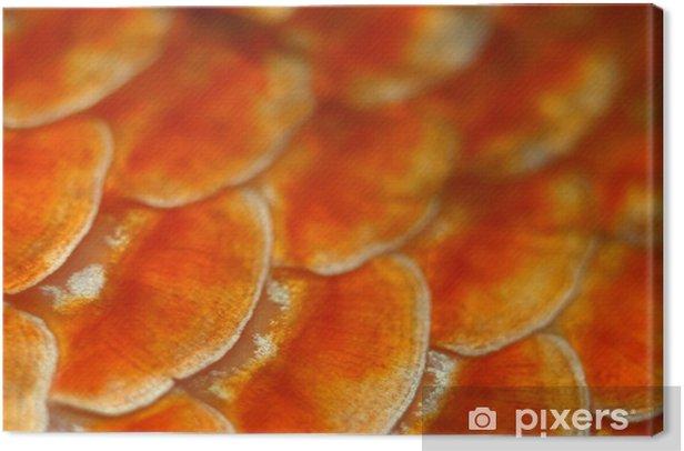 Obraz na płótnie Łuski rybie - Zwierzęta żyjące pod wodą
