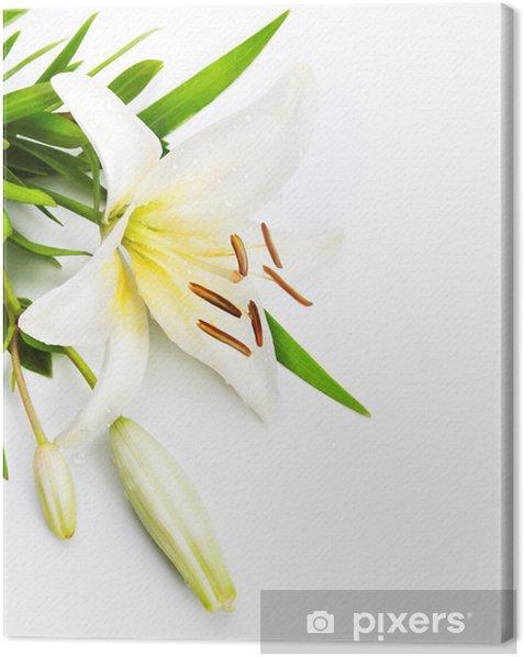 Obraz na płótnie Madonna lilia na białym tle - Pory roku