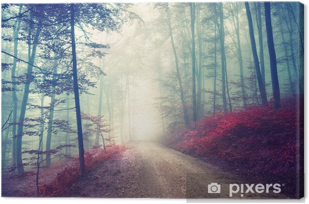 Obraz na płótnie Magiczna leśna ścieżka - Las