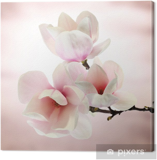 Obraz na płótnie Magnolia - Tematy