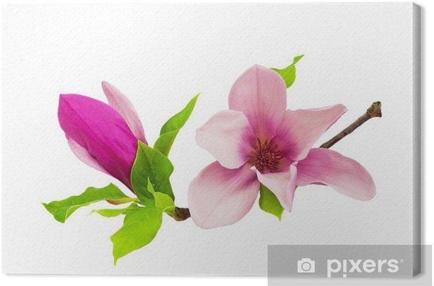 Obraz na płótnie Magnolia - Kwiaty