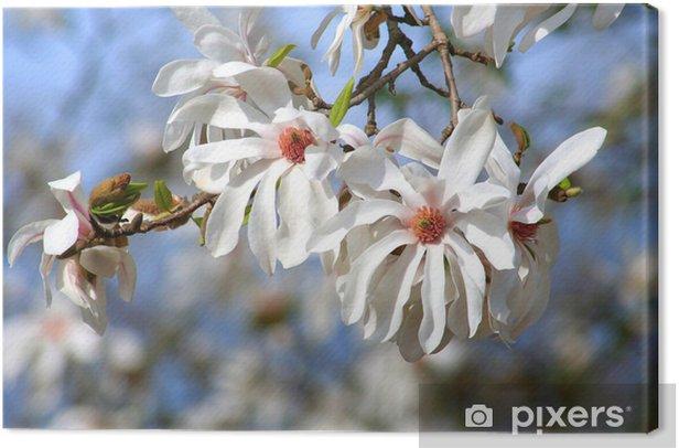 Obraz na płótnie Magnolienzweig - Drzewa