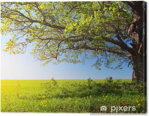 Obraz na płótnie Majestatyczne drzewo - Przeznaczenia