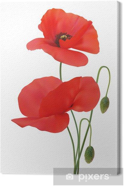 Obraz na płótnie Mak szkarłatny kolor - Rośliny