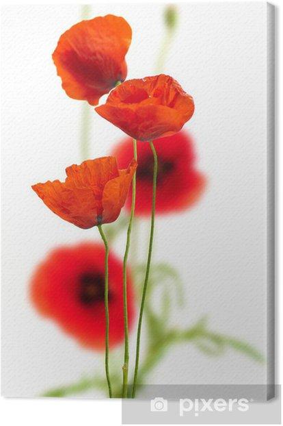 Obraz na płótnie Maki na białym - czerwony mak, kwiatowy wzór - Kwiaty