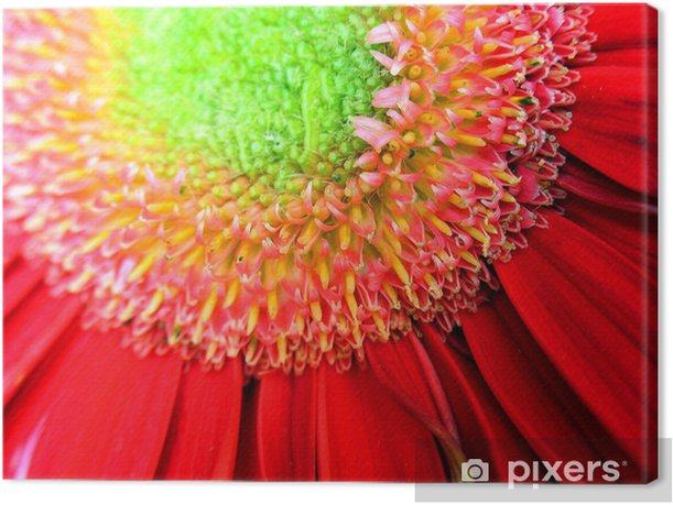 Obraz na płótnie Makro obraz czerwony Gerbera kwiat - Rośliny