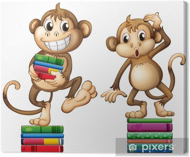 Obraz na płótnie Małpy - Ssaki
