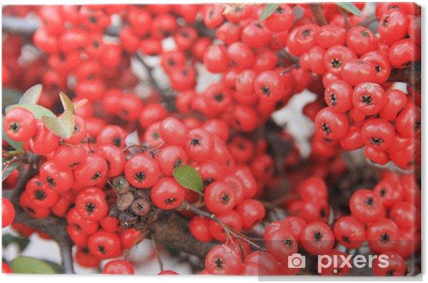 Obraz na płótnie Mały czerwony owoc - Rośliny