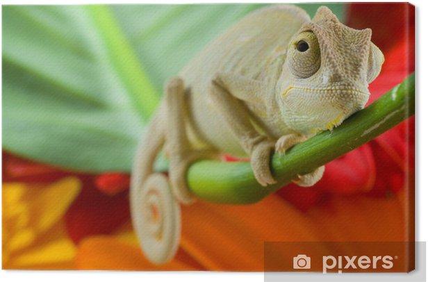 Obraz na płótnie Mały kameleon - Tematy