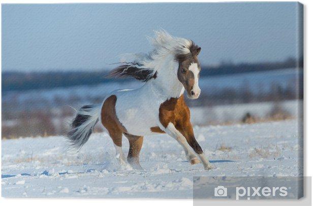 Obraz na płótnie Mały koń uruchomiony w śniegu w polu - Pory roku