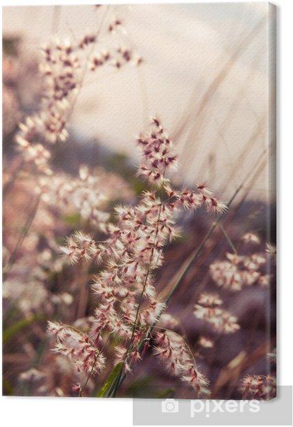 Obraz na płótnie Mały kwiat trawy na relaks czas. soft focus. pastelowych kolorów - Kwiaty