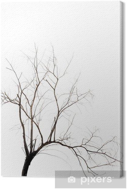 Obraz na płótnie Martwe drzewo - Drzewa