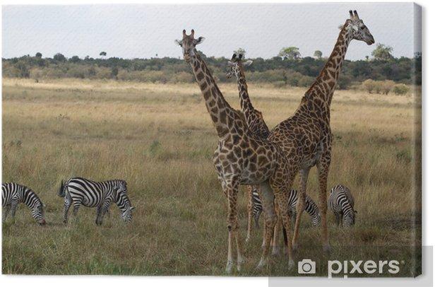 Obraz na płótnie Masai Mara przyroda - Tematy