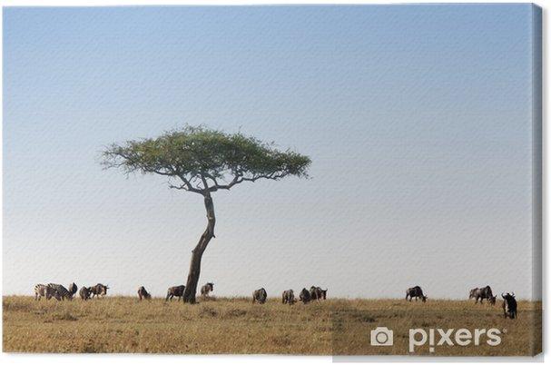 Obraz na płótnie Masai Mara - Afryka