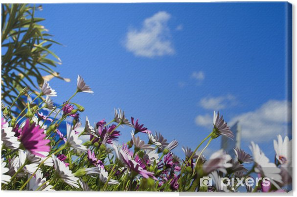 Obraz na płótnie Meadow Flower - Dom i ogród