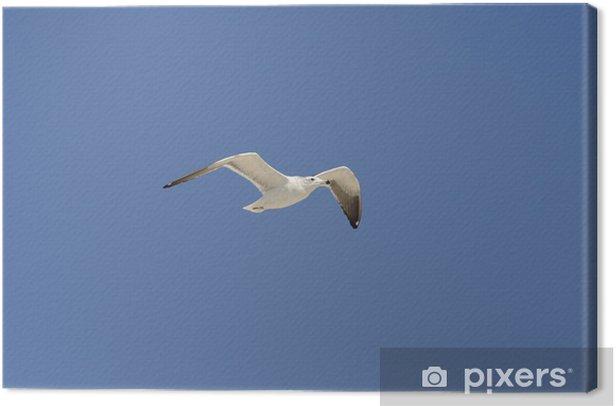 Obraz na płótnie Mewa latania - Inne przedmioty