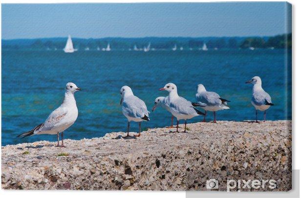 Obraz na płótnie Mewy na brzegu morza - Ptaki
