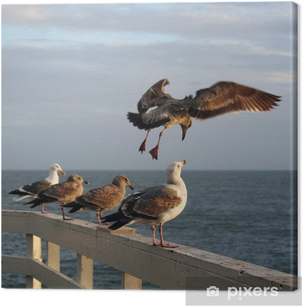 Obraz na płótnie Mewy na molo - Ptaki