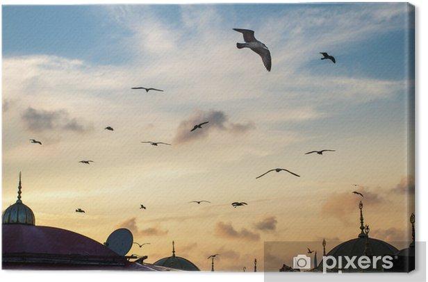 Obraz na płótnie Mewy przed zachodem słońca niebo - Bliski Wschód