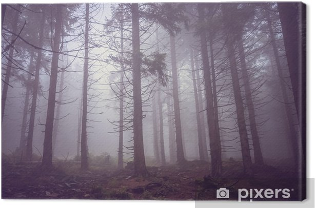 Obraz na płótnie Mgła w lesie latem nawiedzonym - Krajobrazy