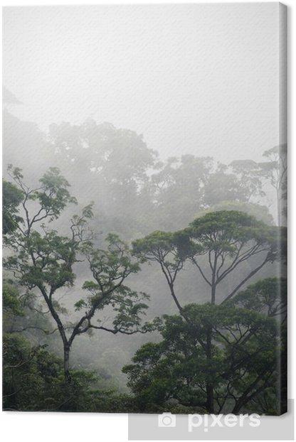 Obraz na płótnie Mglisty las dżungla - Krajobrazy