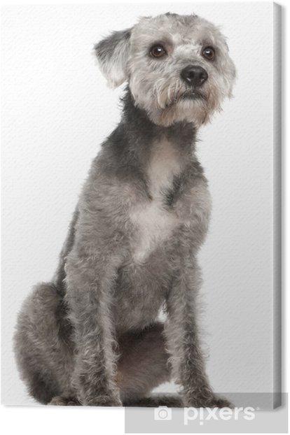 Obraz na płótnie Mieszane rasy psów, 1 roku życia, siedzący - Ssaki