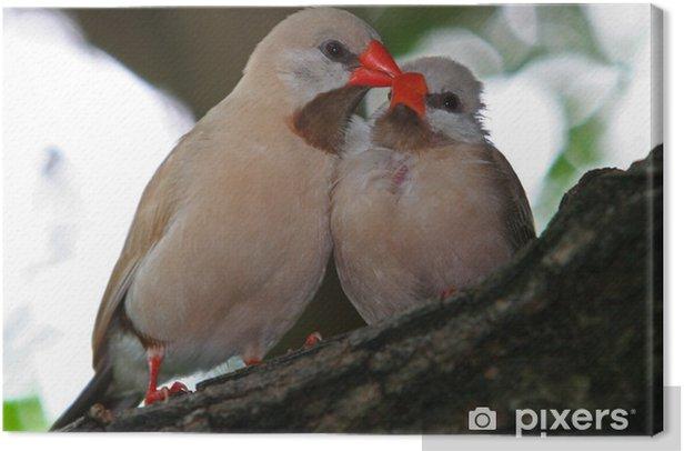 Obraz na płótnie MIŁOŚĆ I szczęściem - Ptaki