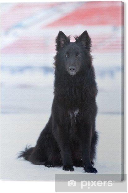 Obraz na płótnie Młody czarny pies - Ssaki