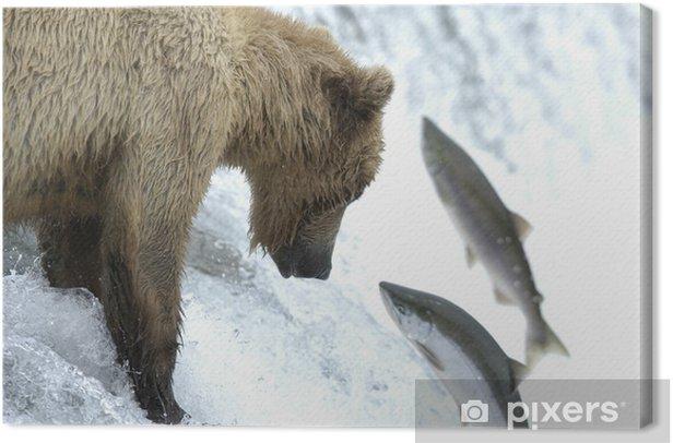 Obraz na płótnie Młody niedźwiedź brunatny próbuje złapać łososia - Tematy