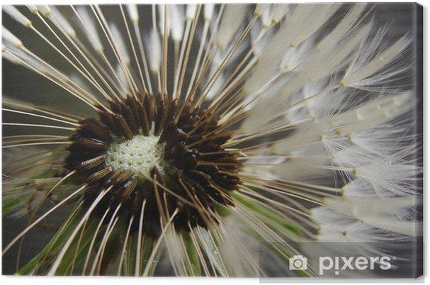 Obraz na płótnie Mniszek lekarski - Rośliny