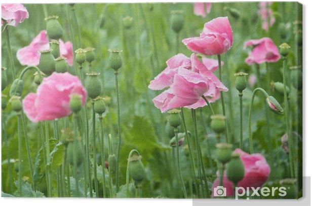Obraz na płótnie Mohn - Maki - Kwiaty