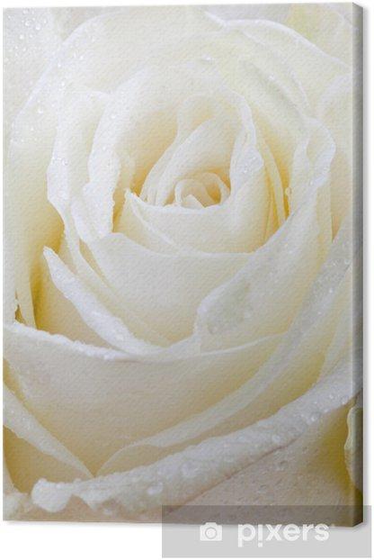 Obraz na płótnie Mokry biała róża - Kwiaty